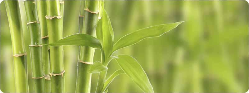 tupper de bambu ecologico